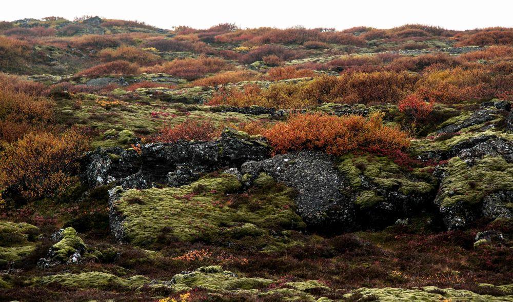 Photo in Random #autumn #moss #stone #rock #bush #landscape #iceland #lava.