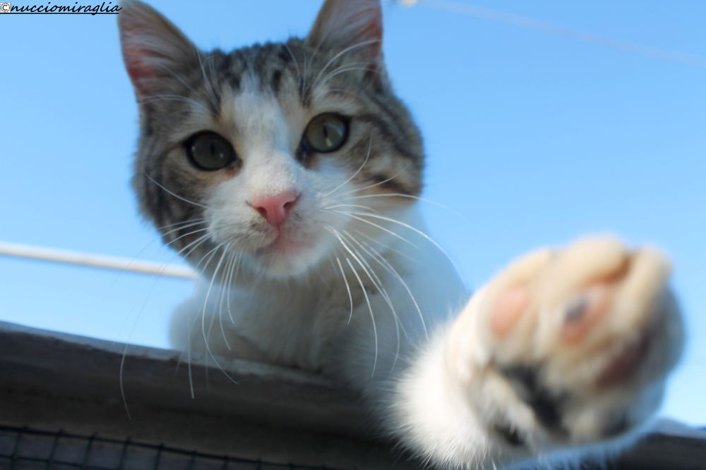 Beethoven cat photographer by nucciomiraglia