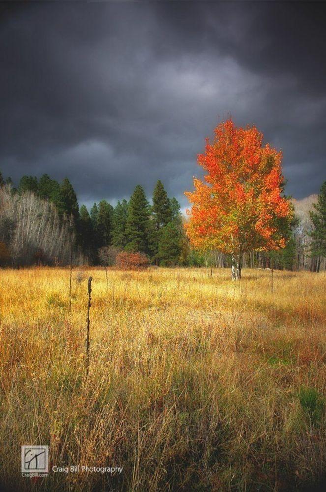 Tree Storm by Craig Bill