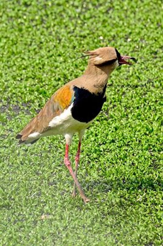 bird  by ro