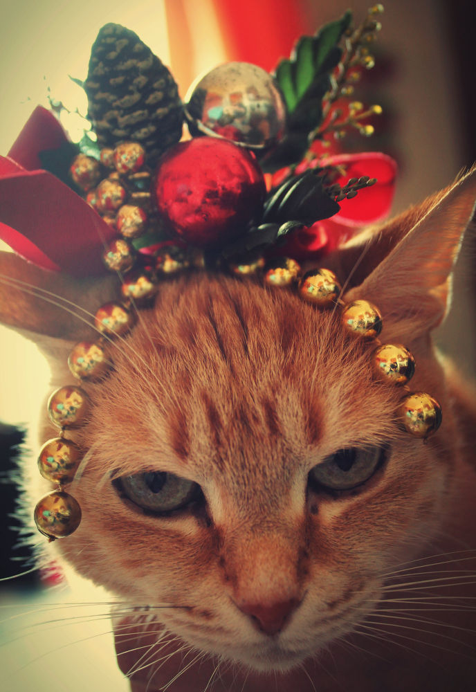 My Christmas cat by Laura Miraglia