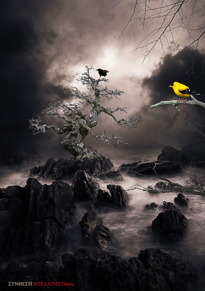 Photo in Random #surreal #rocks #tree