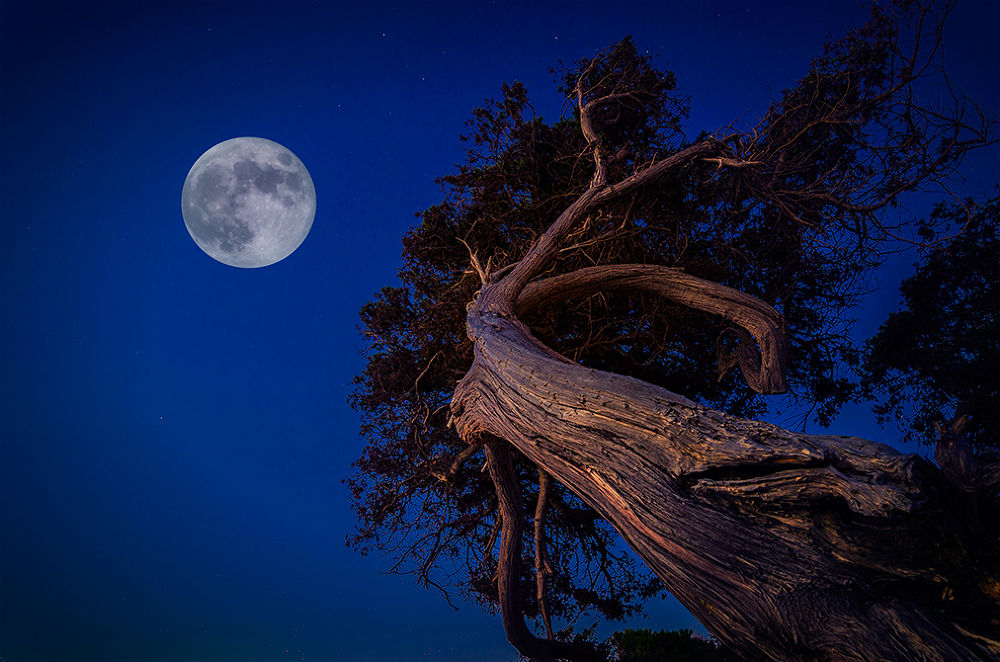 Tree and the moon by Fabrizio Lutzoni