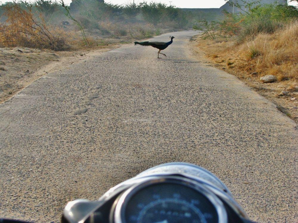 Travel, u nevr know whom u'll meet.. by HiteshSoni