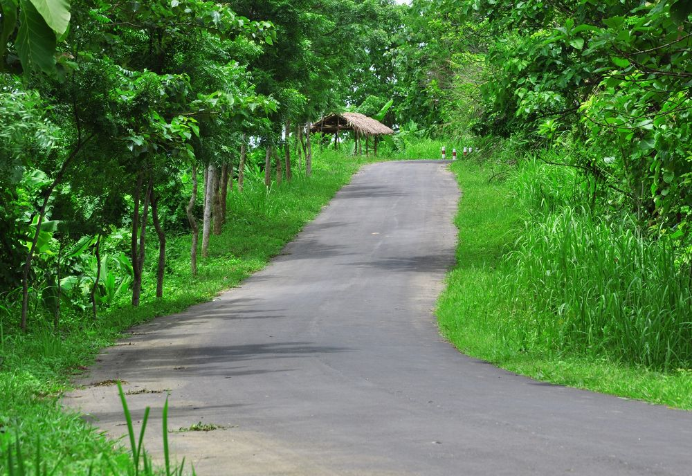 The way of Peace  by Falgun Tipu