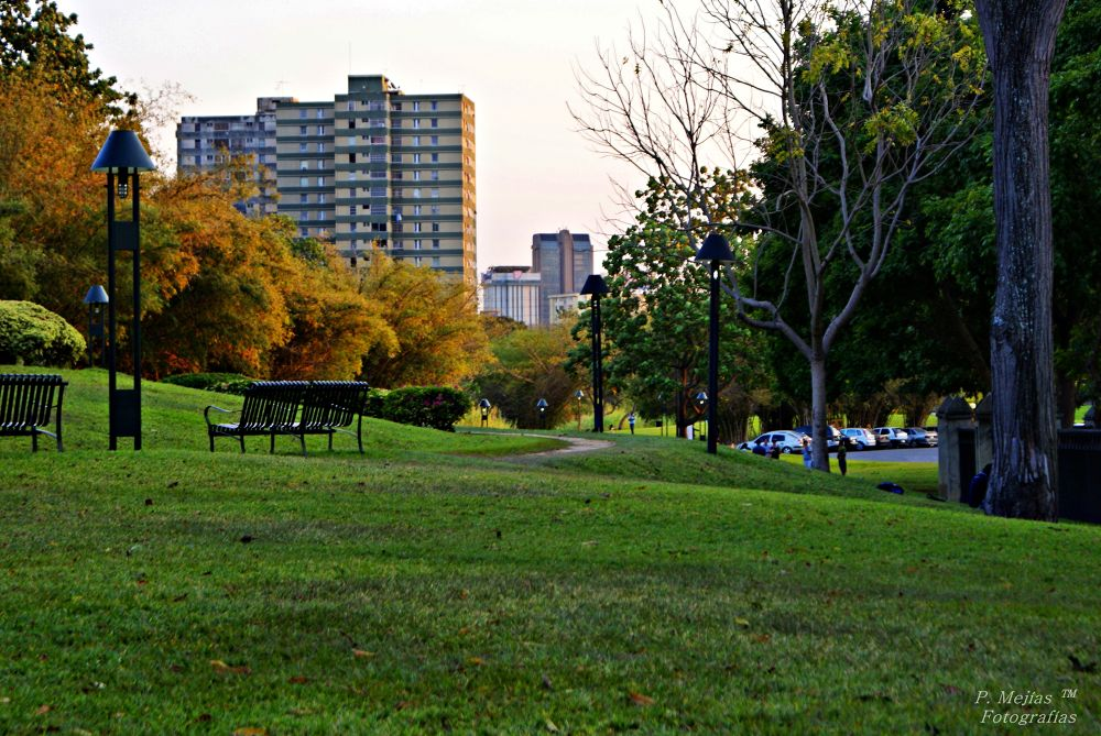 Park and city. by Pedro
