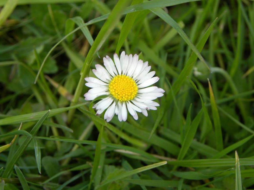 pretty flower by oana_ghe
