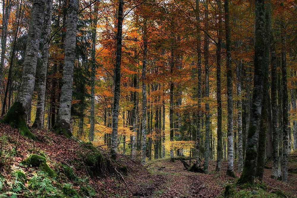 Woods by rodriquezgabriele