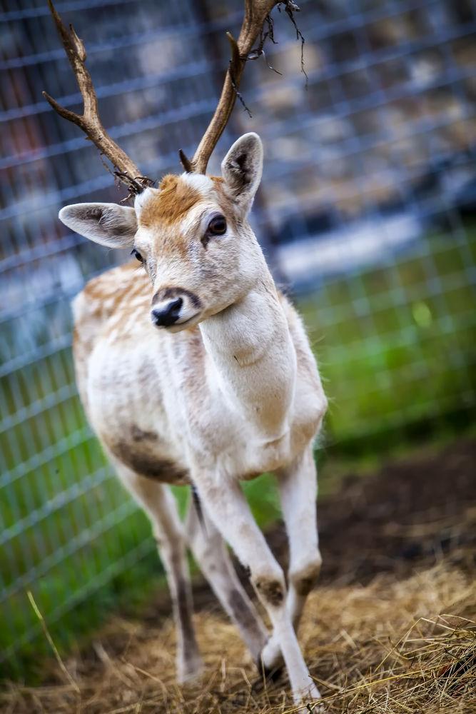Bambi by rodriquezgabriele