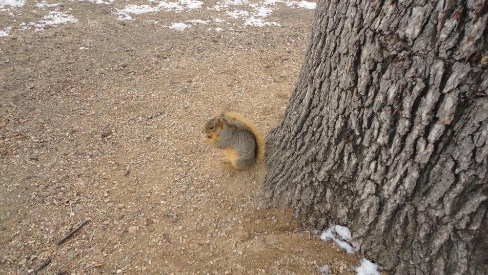 A Beautiful Squirrel by Tibu.Aguirre