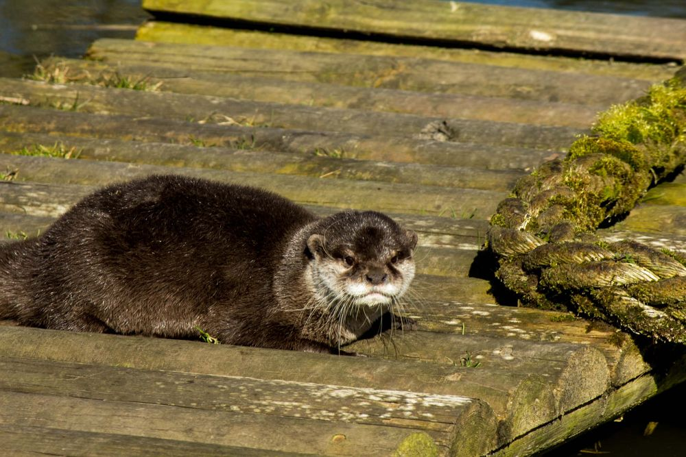 otter 5 by jeff