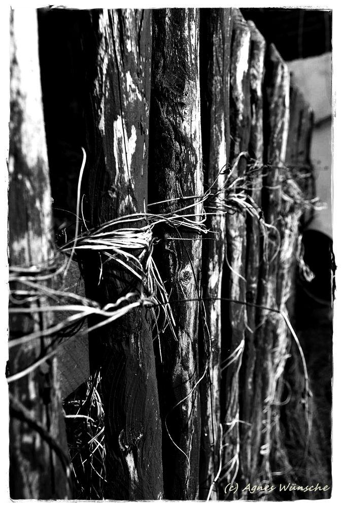 Zaun by agneswuensche