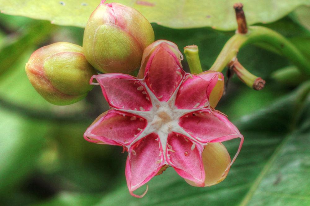 flora by agus pratama setyawan