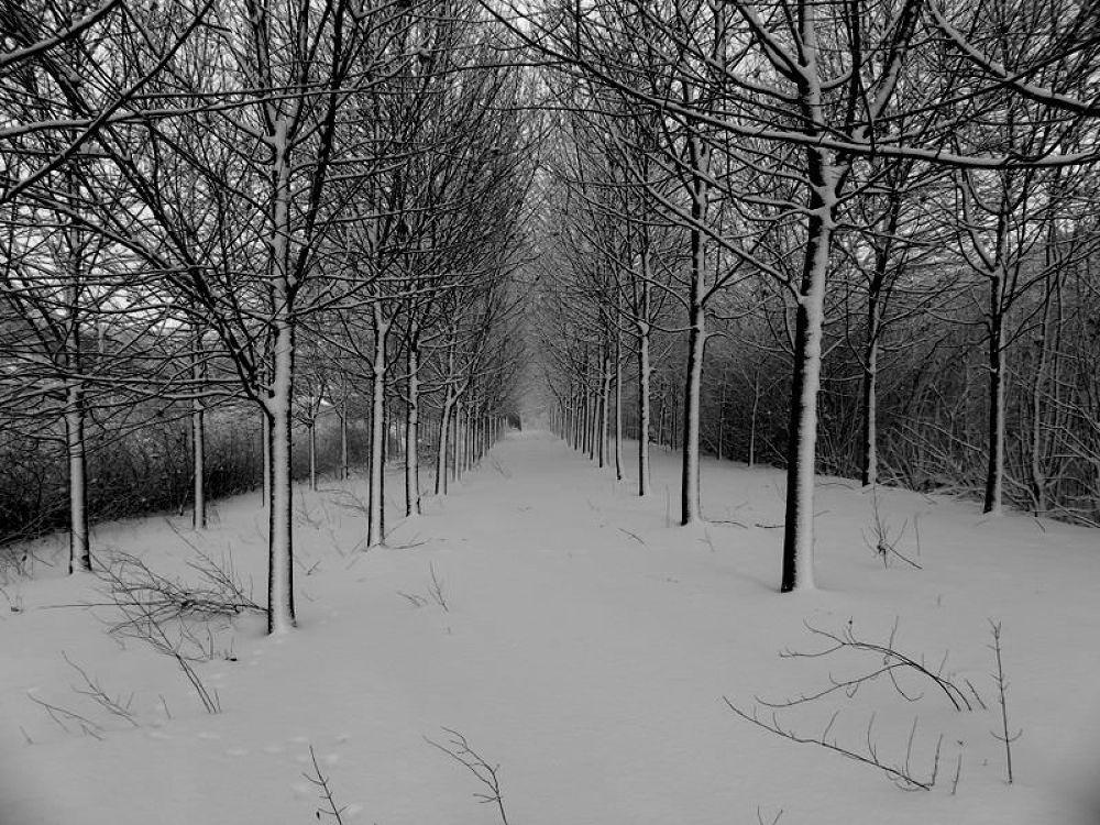 le chemin  by hhenryphotography