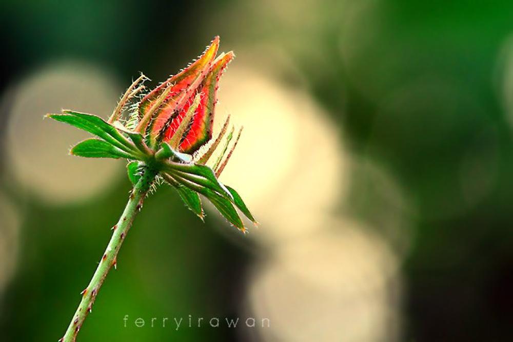 alone...... by norferryirawan