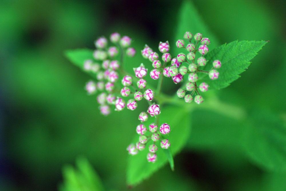 just a flower by ellenekevik