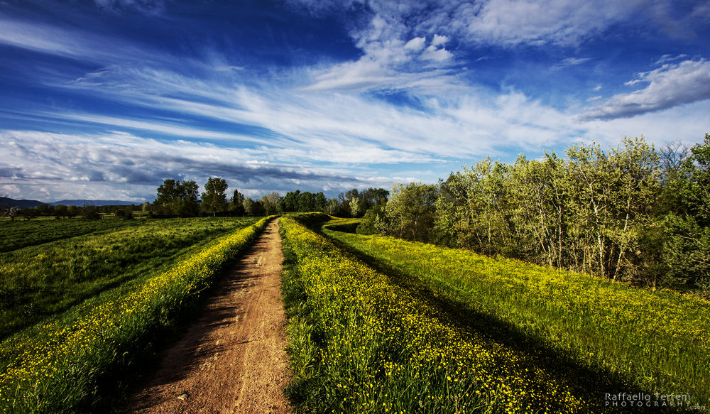 Lonely Road by Raffaello Terreni Photography