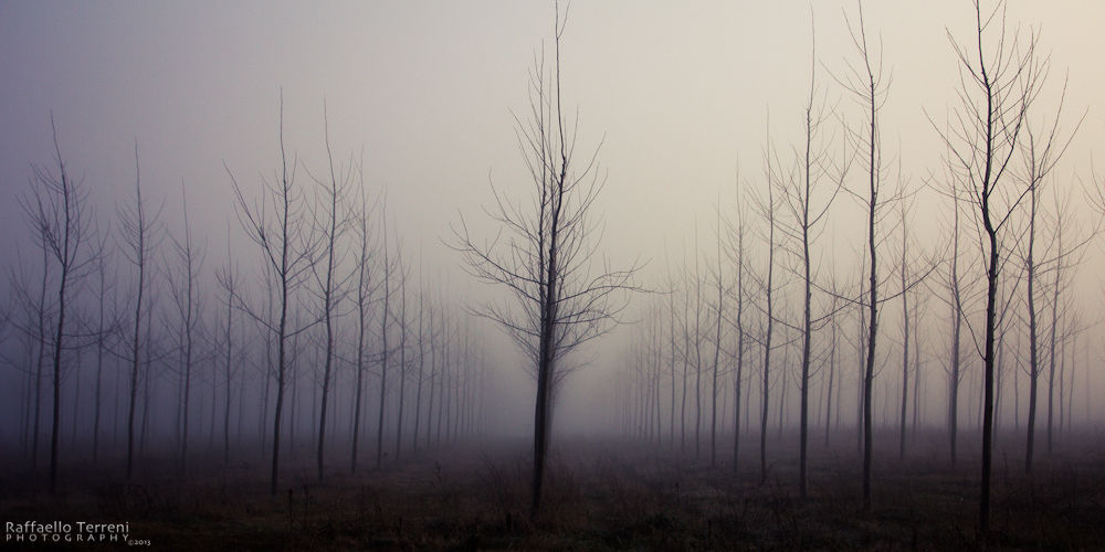 Photo in Random #poplars #pioppi #fog #nebbia #mistery #mist #ypa2013