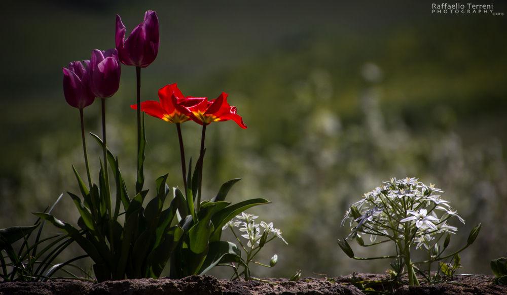 Natural Compo by Raffaello Terreni Photography