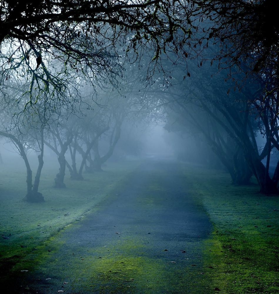 Photo in Nature #ypa2013 #fog #morning