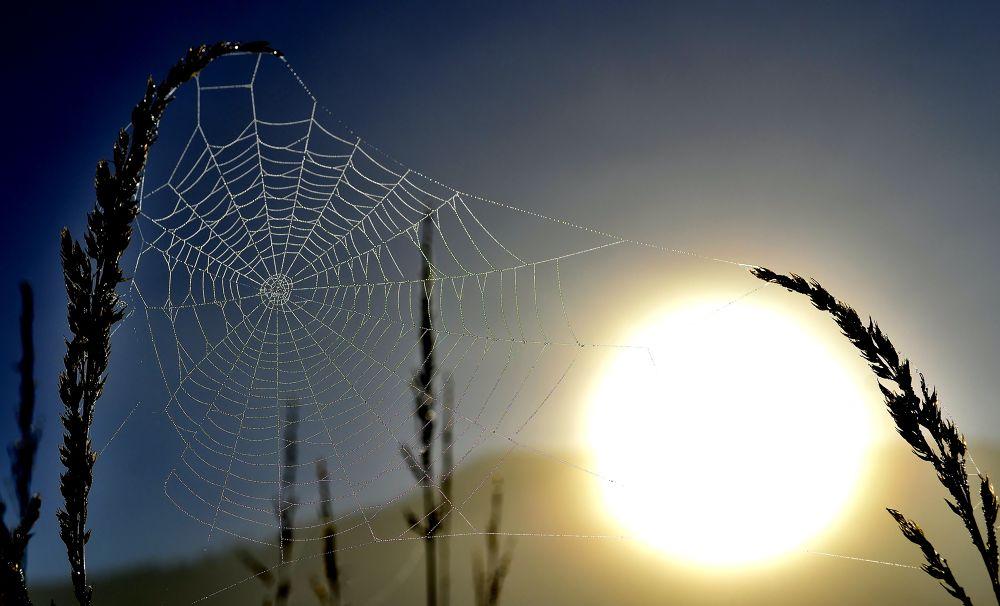 Photo in Nature #ypa2013 #web #sunrise #dawn.