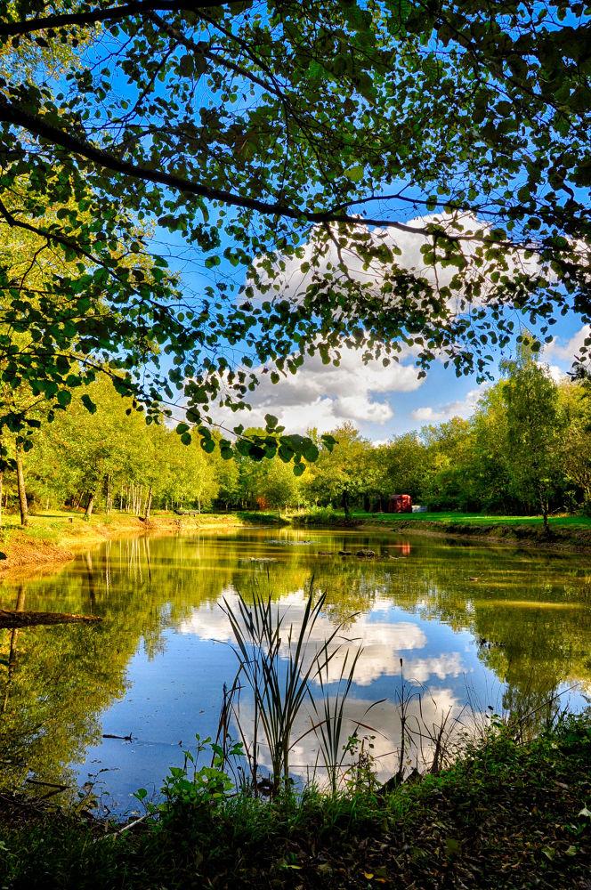 Un étang en été by tchaba