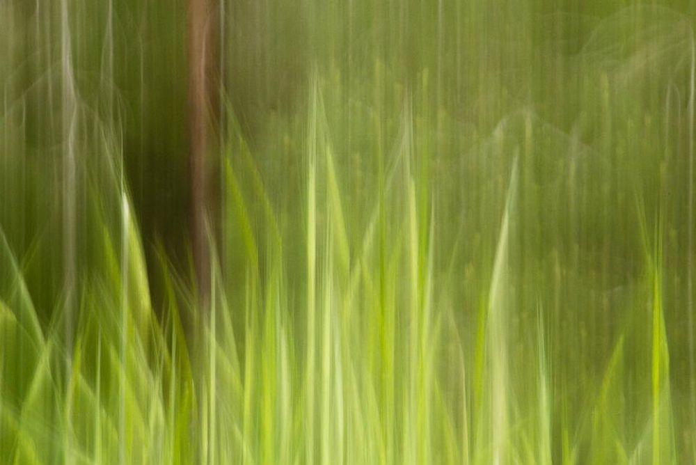 Green Hue by AminDogoonchi