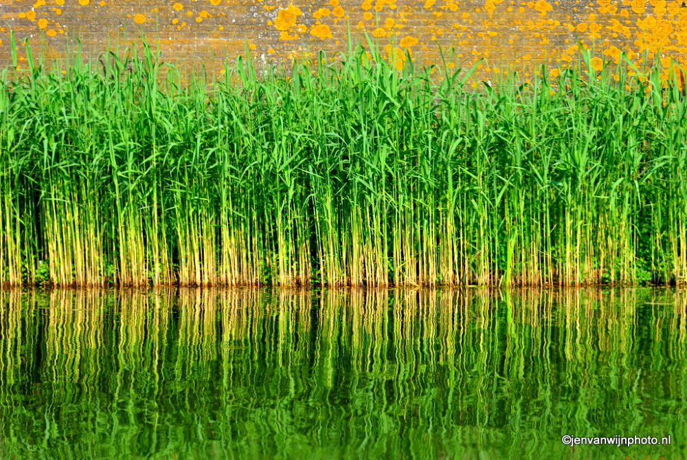 Green Grass in reflection by Jen van Wijngaarden