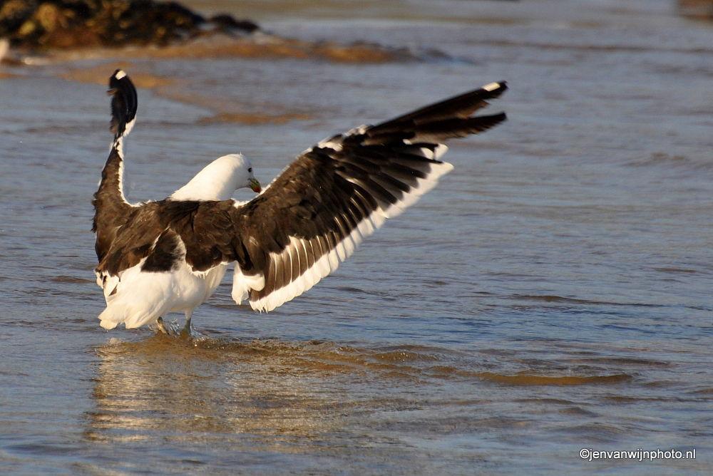 Sea Gull on Wings by Jen van Wijngaarden