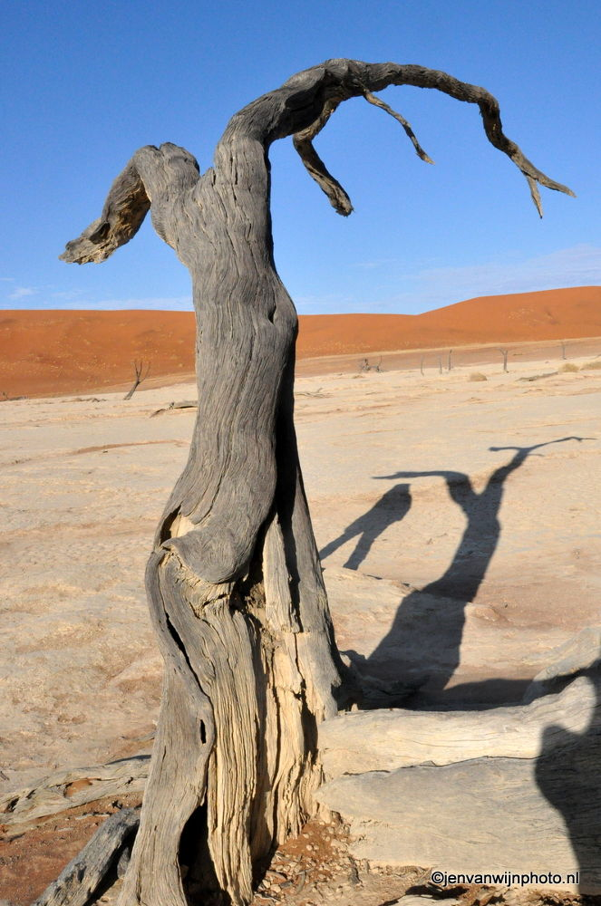 Photo in Landscape #namibia #deathvlei #sossosvlei #sand #sand dunes