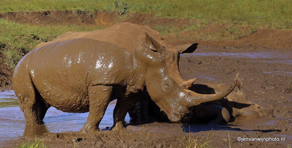 Love my mud bath by Jen van Wijngaarden