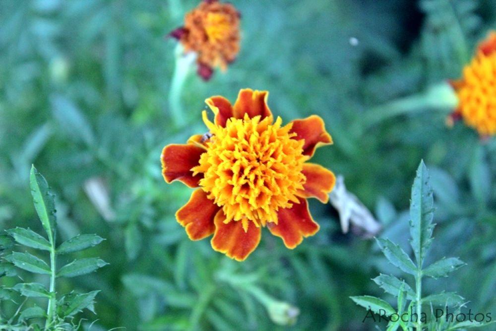 Flowers by AROCHA