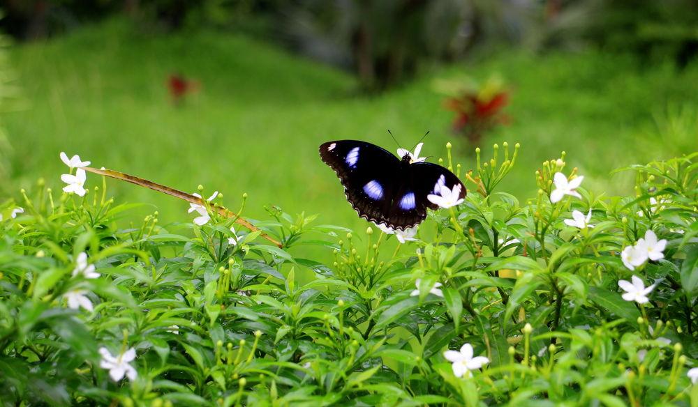 Butterfly - 1 by scarlet mon