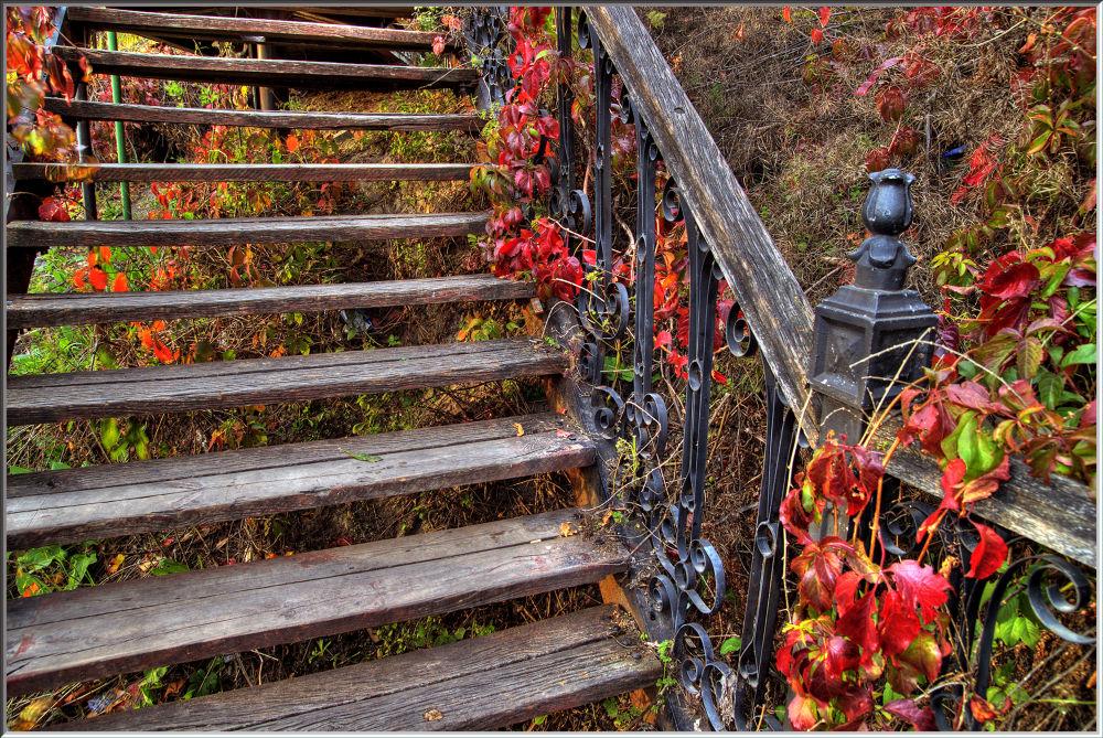 Photo in Fine Art #ypa2013 #autumn #ukraine #kyiv