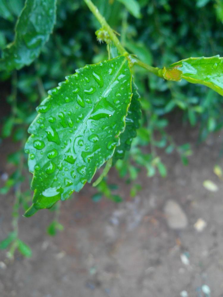 when the rain has come.... by mouuztov vaz