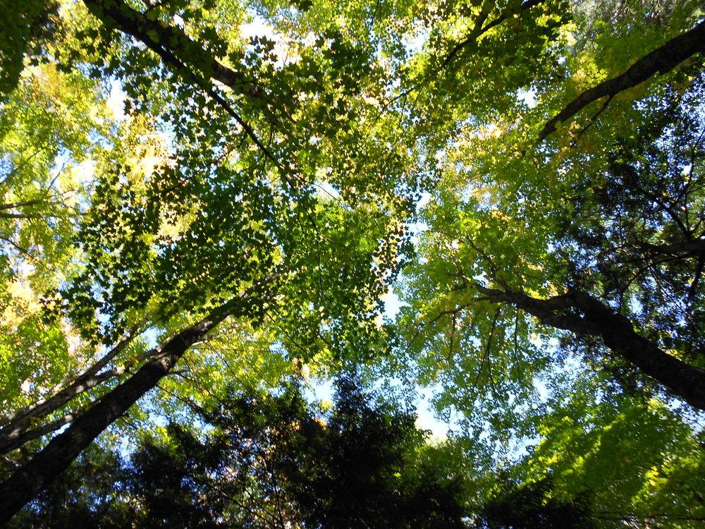 green trees by kidonthemountain