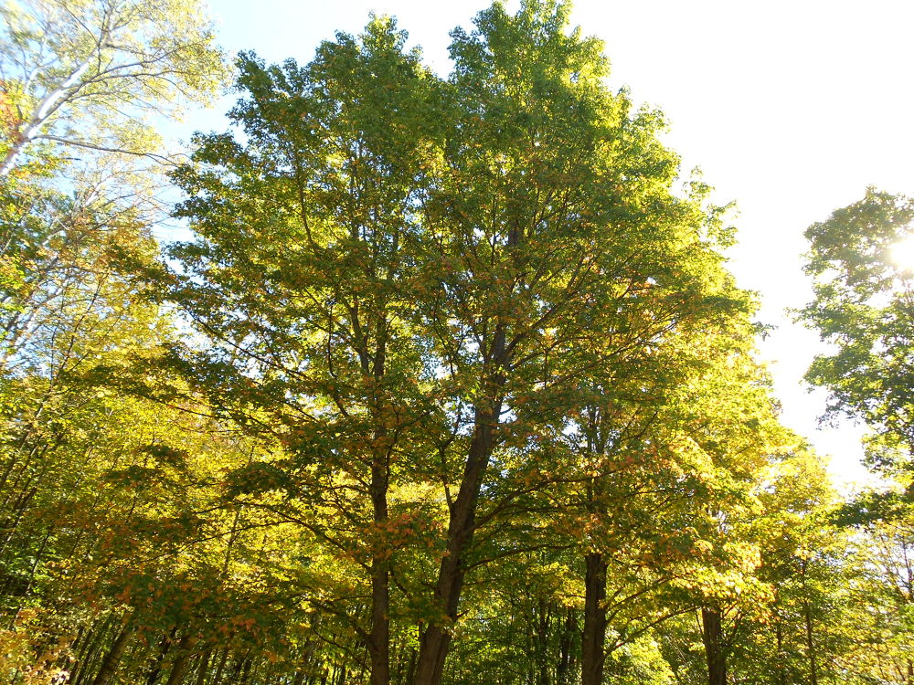 Photo in Nature #trees #fall #autumn #forest #woods #sky #nature