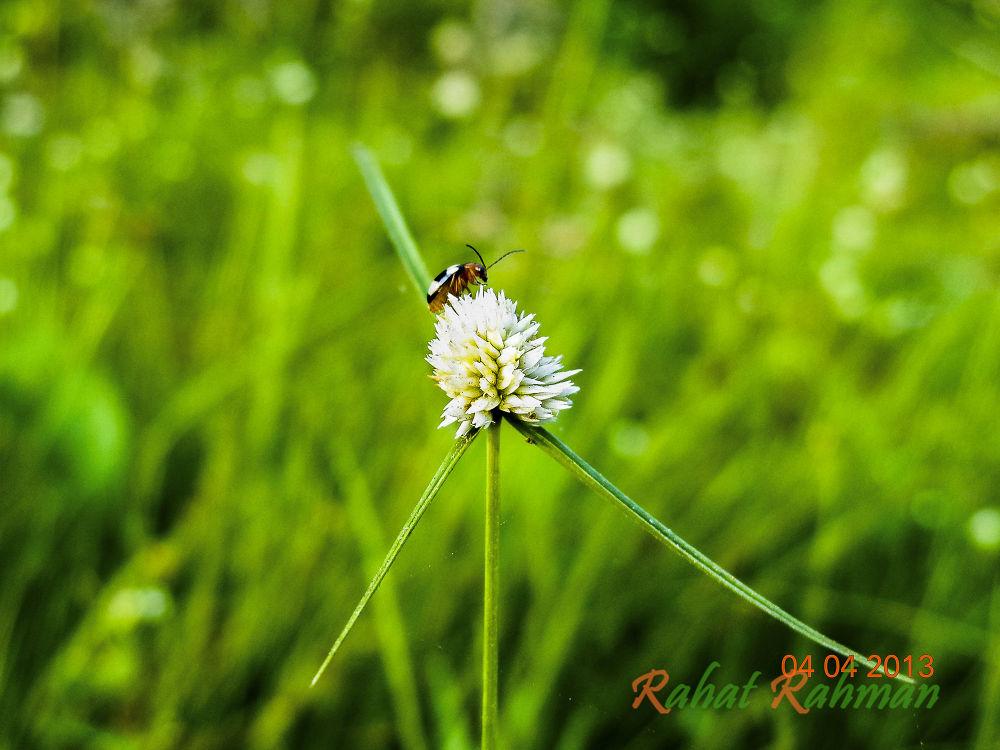 """এইতো জীবন """"http://www.flickr.com/photos/96865795@N04/9571264442/"""" by RahatRahman"""