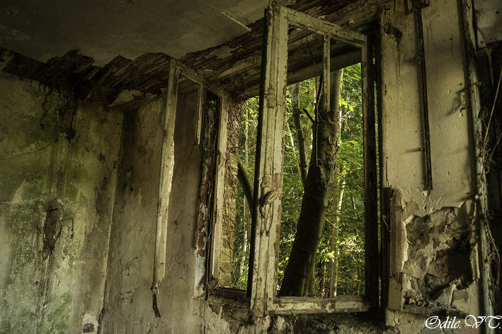 la petite maison dans les bois  by Odilevantroys