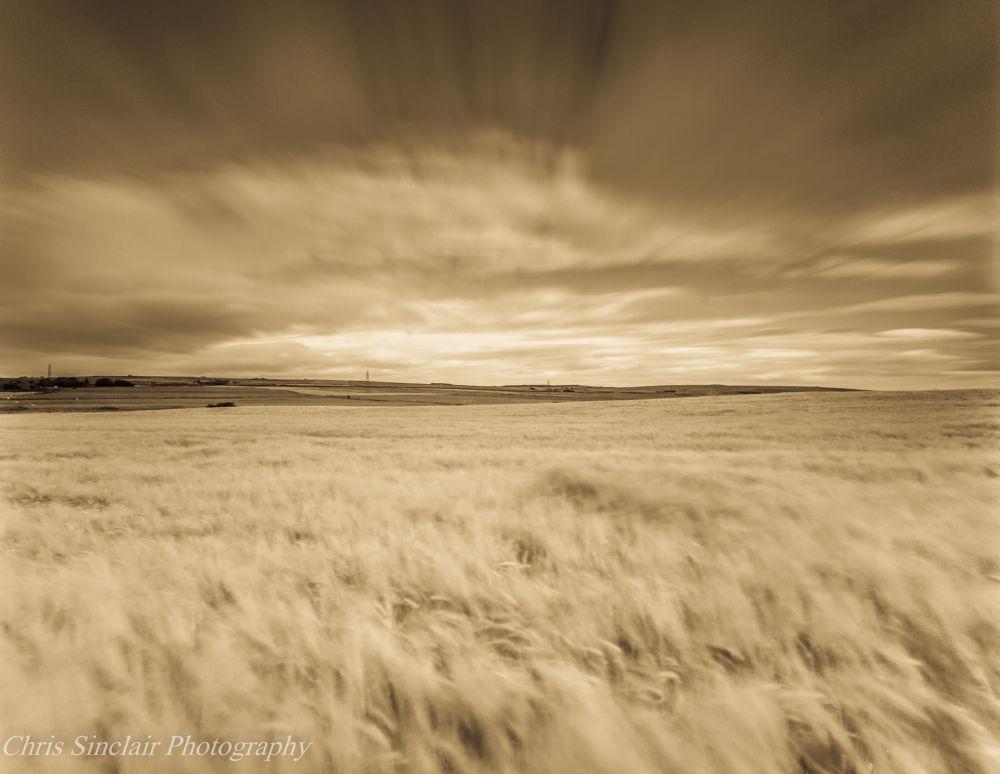 The Barley Sea by Chris Sinclair