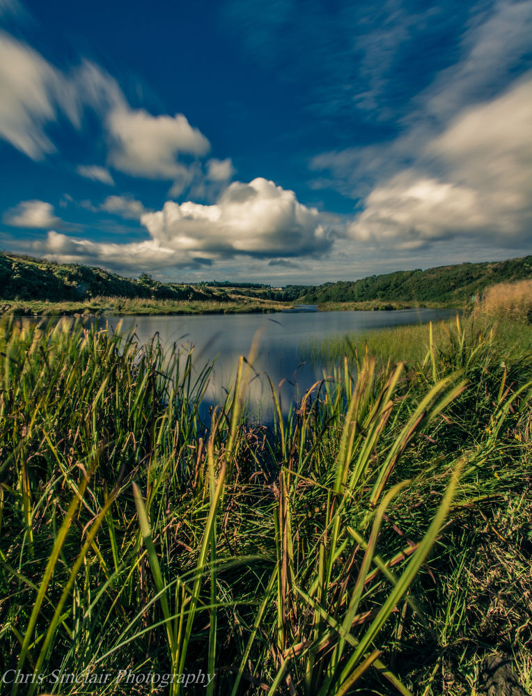 Through the Reeds by Chris Sinclair