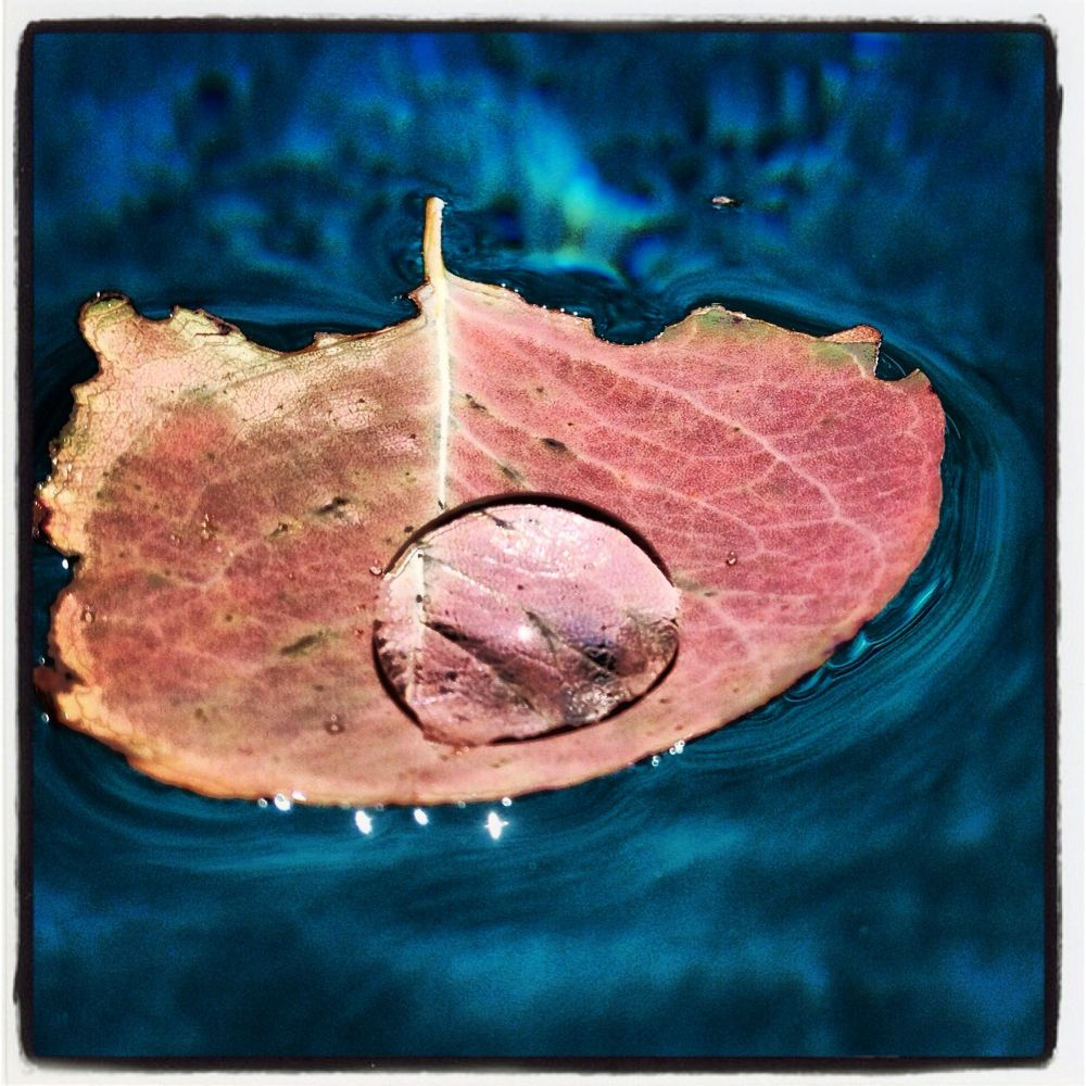 Photo in Random #leaf #leaf in pool #dew drop