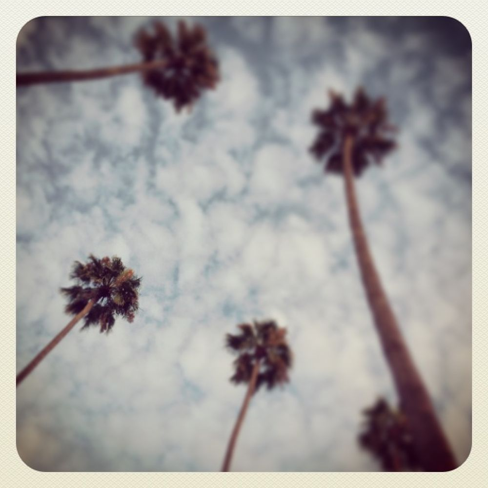 Photo in Random #hollywood #california #palm trees