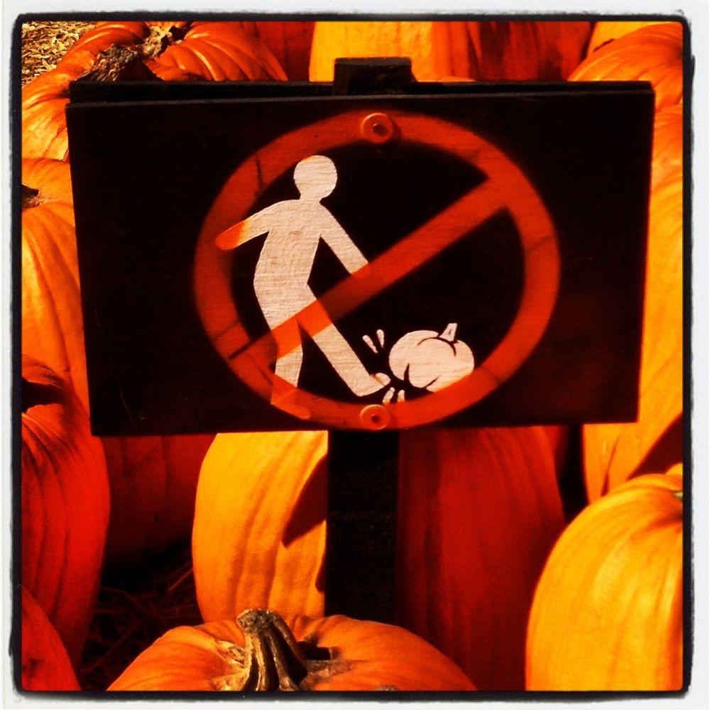 "Beverly Hills Halloween ""Don't Kick The Pumpkins""   by CB Harding"