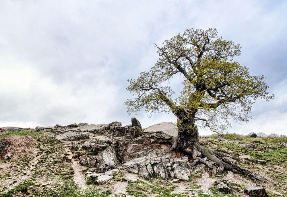 Photo in Landscape #tree #rocks #landscape