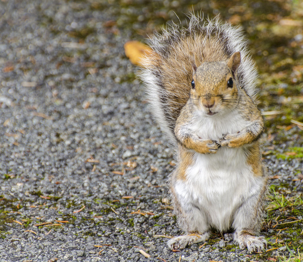 Photo in Animal #squirrel #animal #cheeky #expression