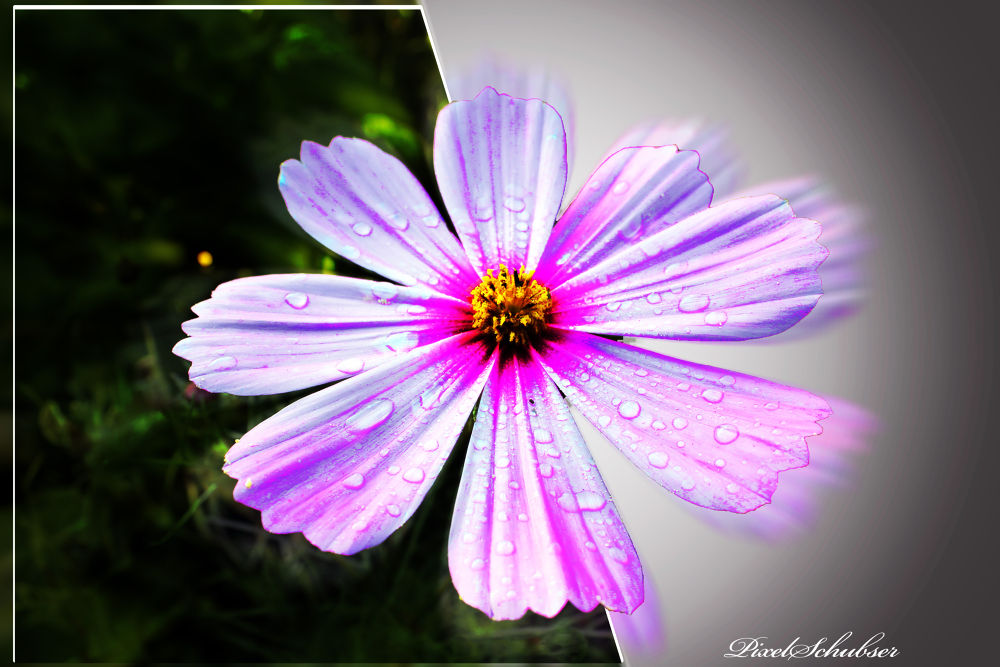 Flower-Power by haraldkleiner