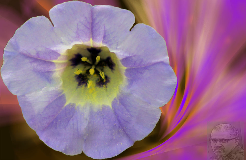 blue flying flower-1 by haraldkleiner