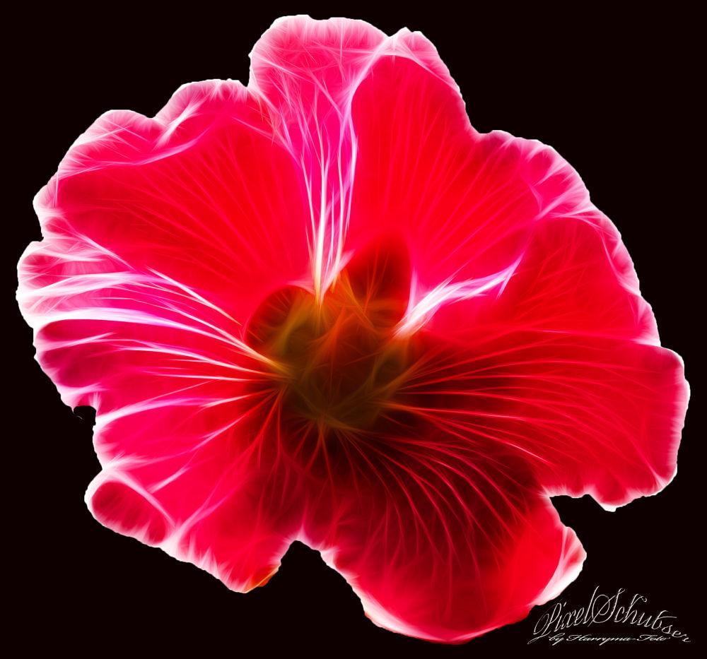 light_behind_Flower by haraldkleiner