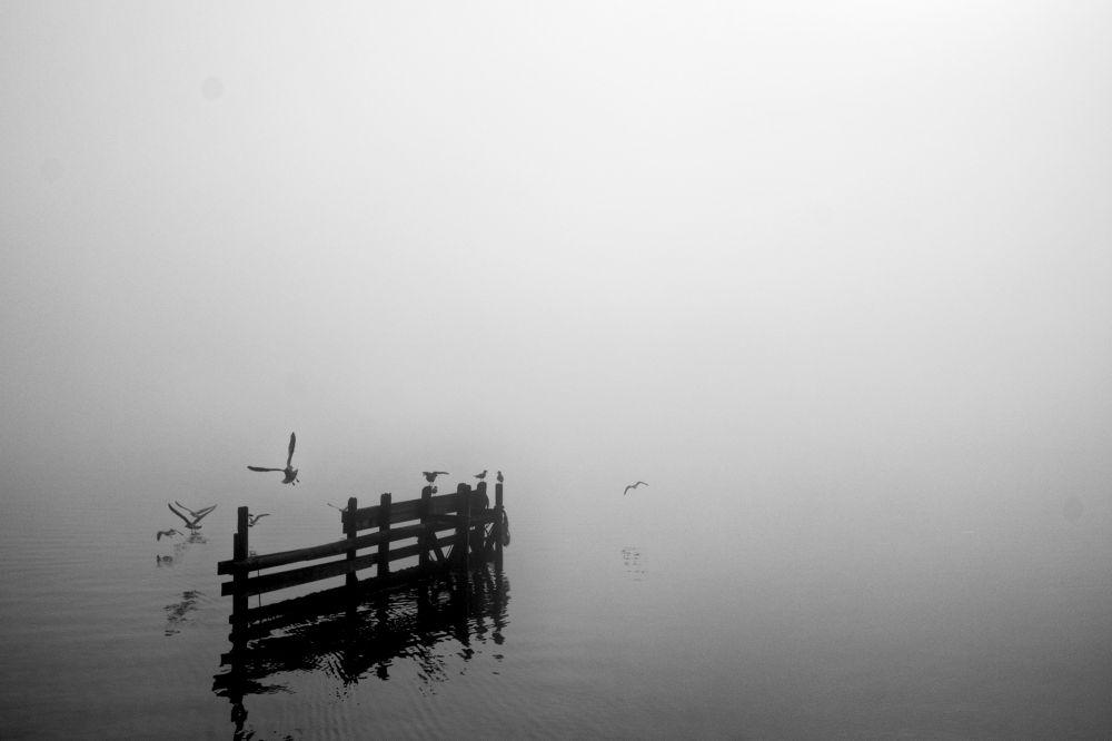Photo in Random #hardangerfjord #fog #ypa2013